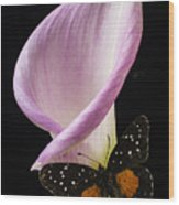 Pink Calla Lily With Butterfly Wood Print