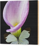 Pink Calla Lily With White Butterfly Wood Print
