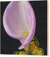 Pink Calla Lily With Yellow Butterfly Wood Print