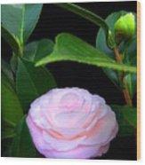 Pink Camelia Wood Print