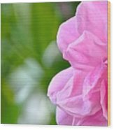 Pink Camellia Wood Print by Lori Kesten
