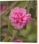 Pink Camellia 2 Wood Print