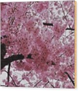 Pink Canopy Wood Print