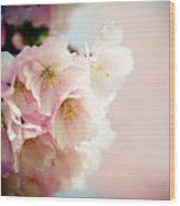 Pink Cherry Blossoms Closeup Wood Print