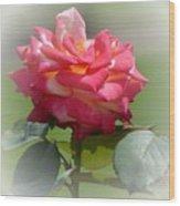 Pink Chiffon Ruffles Wood Print