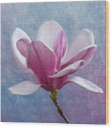 Pink Chinese Magnolia Flower Wood Print