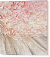 Pink Chrysanthemum With Antique Distress Wood Print