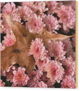 Pink Chrysanthemums With Pin Oak Leaf Wood Print