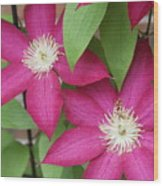 Pink Clematis 2 Wood Print