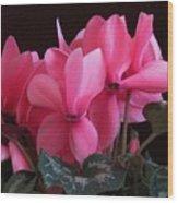 Pink Cyclamen  Wood Print