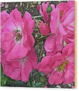 Pink Climbing Roses - Digitally Enhanced Wood Print