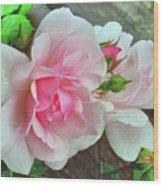 Pink Cluster Of Roses Wood Print