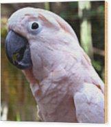 Pink Cockatoo Wood Print
