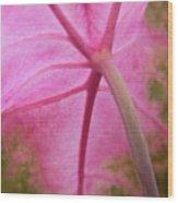 Pink Coleus Wood Print