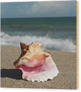 Pink Conch  Wood Print