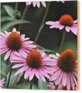 Pink Coneflowers Wood Print
