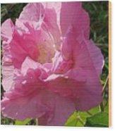 Pink Confederate Rose Wood Print
