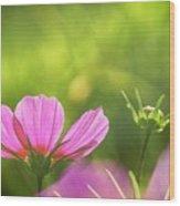Pink Cosmos Wood Print