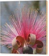 Pink Crown Wood Print