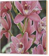 Pink Cymbidium Orchid #3 Wood Print