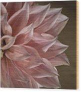 Pink Dahlia In Bloom Wood Print