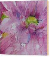 Pink Daisy Wood Print