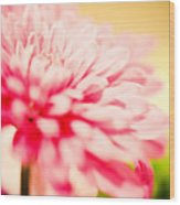 Pink Daisy Subdued Wood Print