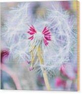 Pink Dandelion Wood Print