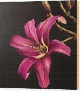Pink Daylily Wood Print