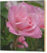 Pink Delicacy  Wood Print