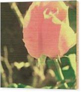 Pink Desolation Wood Print