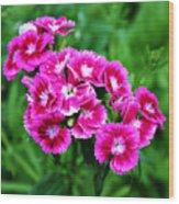 Pink Dianthus Wood Print