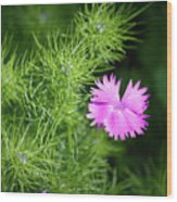Pink Dianthus With Nigella Buds Wood Print
