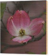 Pink Dogwood Blossom Wood Print