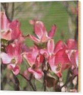 Pink Dogwood Blossoms Wood Print