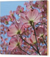 Pink Dogwood Flowers Landscape 11 Blue Sky Botanical Artwork Baslee Troutman Wood Print