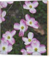 Pink Dogwood Mo Bot Garden Dsc01756 Wood Print