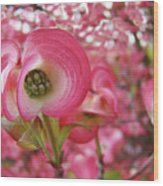 Pink Dogwood Tree Flowers Dogwood Flowers Giclee Art Prints Baslee Troutman Wood Print