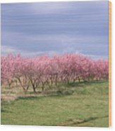 Pink Pear Trees Wood Print