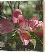 Pink Dogwoods Wood Print