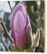 Pink Early Bloom  Wood Print