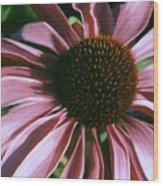 Pink Echinacea Wood Print