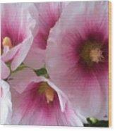 Pink-faced Hollyhocks Wood Print
