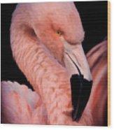 Pink Flamingo Portrait Wood Print