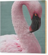 Pink Flamingo Profile 2 Wood Print