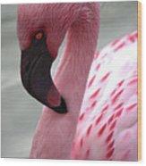 Pink Flamingo Profile Wood Print