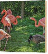 Pink Flamingos And Imposters Wood Print