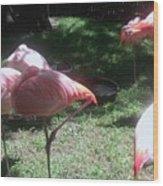 Pink Flamingos Resting Wood Print