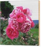 Pink Floribunda Roses Wood Print