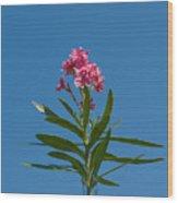 Pink Florida Oleander Blossom Wood Print